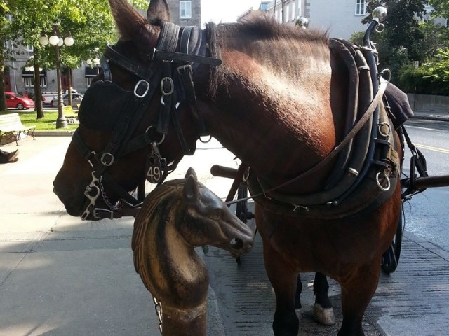Carriage Ride in Quebec